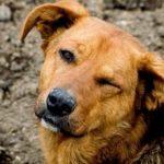 животные, которые помогли другим